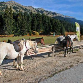 Ελάτη, Περτούλι, ιππασία, άλογα