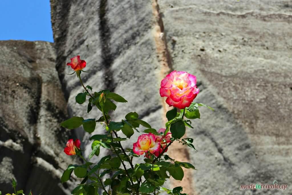 Λουλούδια στα Μετέωρα